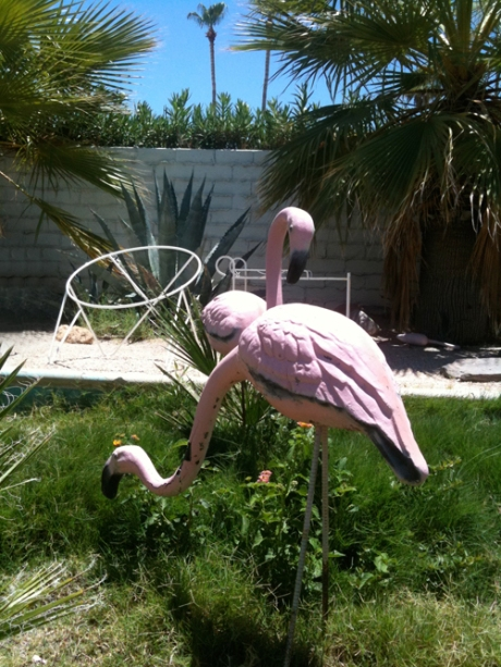 concrete garden flamingos Palm Springs Dazzles